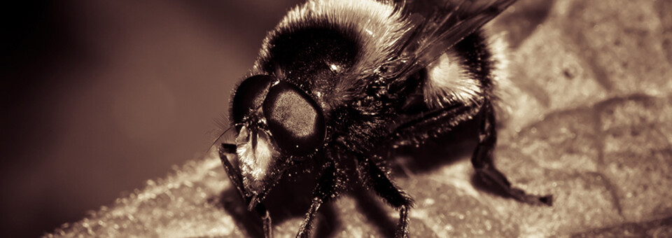 Adobe Camera Raw – Bee