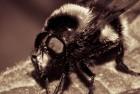 Adobe Camera Raw – Bee